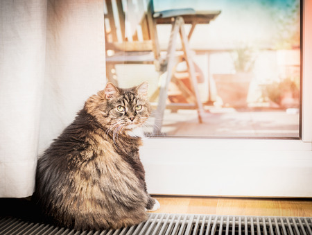 balcony door: Domestic cat sitting in a glass balcony door and looking at the camera