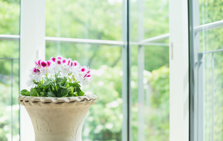 Terracotta vase or flowers pot with geranium flowers over window into the garden background, home decoration and interior