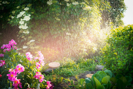 Rain in Lovely summer garden with flowers and sunlight, outdoor nature background