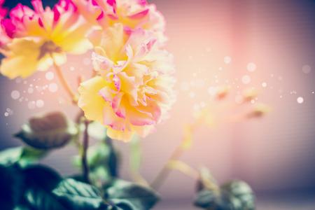 Belles roses roses jaunes fleurs au coucher du soleil, fond de nature en plein air Banque d'images