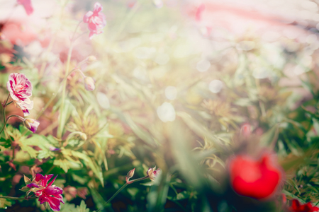 grasses: Blurred summer background with grasses and flowers, outdoor nature background