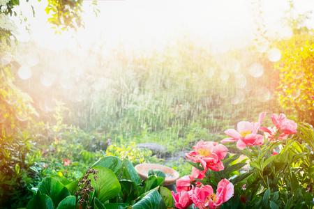 Sonnendusche im Blumengarten. Regen mit Sonnenschein im Garten oder Park, Outdoor Natur Hintergrund mit rosa Blüten und Pflanzen. Standard-Bild