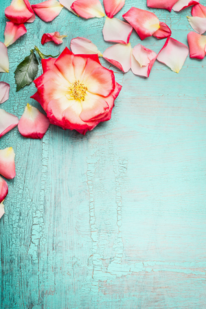 blue petals: Pink rosa flower with petals on blue turquoise shabby chic background, top view, place for text, vertical. Festive Greeting card with rosa flower. Stock Photo