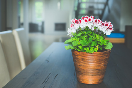 flower pot: Lovely red geranium flowers in pot on table at living room and window background. Home design and decoration.