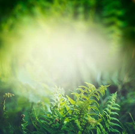 熱帯のジャングルや太陽光、屋外の自然の背景の熱帯雨林の緑のシダ植物