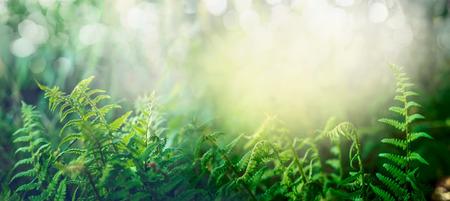 太陽の光、屋外の自然の背景、バナーを持つ熱帯のジャングル フォレストのシダ 写真素材