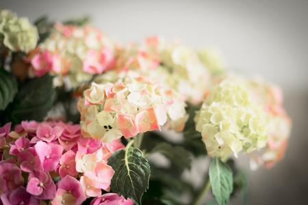 Wonderful flowers of Hydrangea , floral background