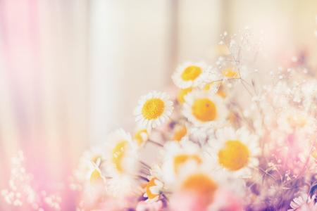 Helle Gänseblümchenblumen, Blumenhintergrund