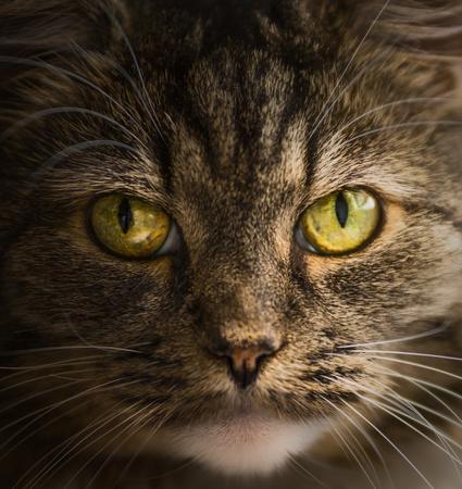 face close up: Cat face portrait, close up