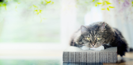 Cat is resting cozy on lounger at window and nature background, banner 스톡 콘텐츠