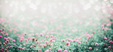 Amazing nature background with meadow of blooming clover , banner