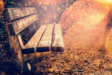 empty bench: Empty bench in autumn garden or park, outdoor