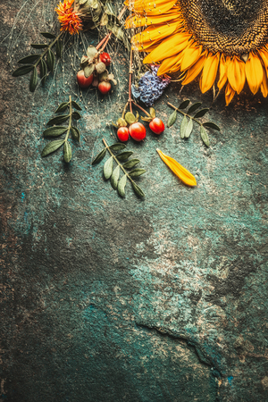 Autumn leaves and sunflower on dark rustic background, top view, border