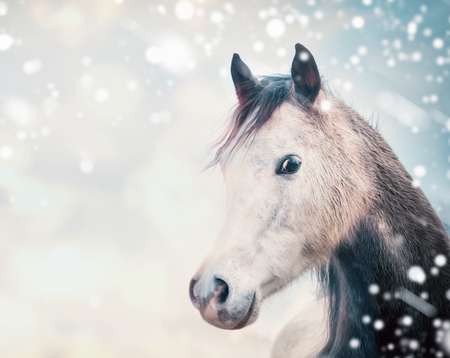 Horse head at winter nature background with fall of snow