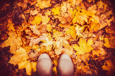 watertight: Rubber boots on autumn leaves , top view, fall nature background, outdoor Stock Photo