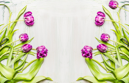 lila: Lovely lila  tulips , flowers frame on white wooden background, top view