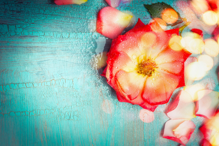 blue petals: Lovely red flower with petals on turquoise  blue background with bokeh, top view, border Stock Photo