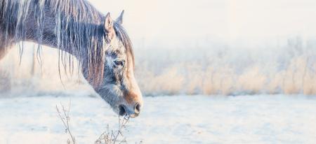 馬の頭に凍るような冬の日、自然の背景、バナー 写真素材