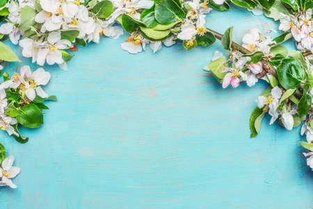 White Spring blossom on blue turquoise wooden background, top view, border. Springtime concept 스톡 콘텐츠