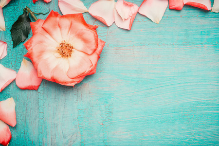 blue petals: Pink pale rose with petals on blue turquoise background, top view . Love , romantic and Valentines day concept