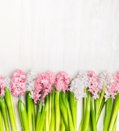 Fresh hyacinths flowers border on white wooden background, top view. Springtime concept