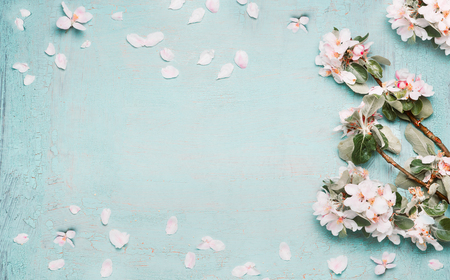 Spring nature background with lovely blossom in blue pastel color, top view, banner. Springtime concept