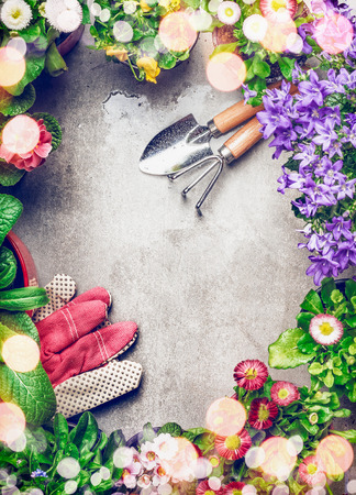 garden frame: Gardening background with assortment of colorful garden flowers in pots and gardening tools, top view, frame Stock Photo