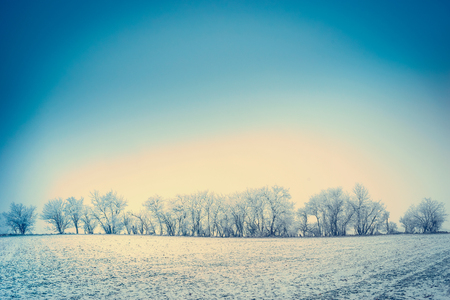 covered fields: Winter nature landscape background with snow, field and trees covered with hoar frost and blue sky