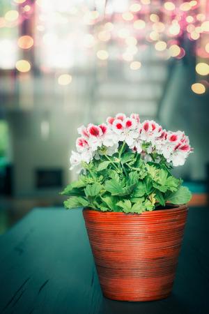 bedlinen: Beautiful red white geranium flowers in wooden pot at cozy home background, indoor
