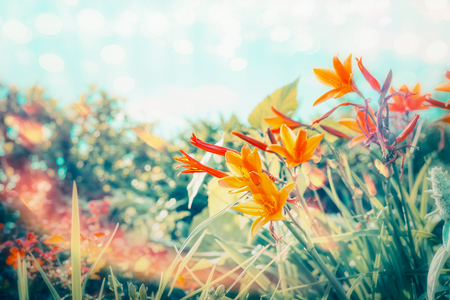 Summer day in flowers garden or park with Lily flowers at sky background with sunlight and bokeh lighting, outdoor nature
