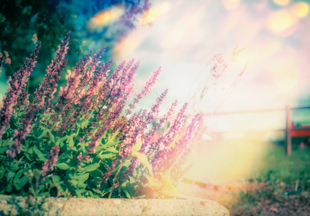 Summer sunny day background with wild herbs and flowers, outdoor nature Stock Photo