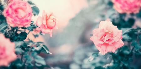 Sorprendente naturaleza de rosas en color pastel