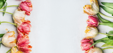 mit: Springtime floral border mit colorful tulips, floral banner, top view. Spring flowers concept