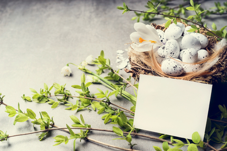 Easter greeting card and nest with eggs on spring twigs , copy space