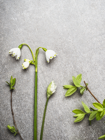 Spring plant and flowers on gray stone background, top view