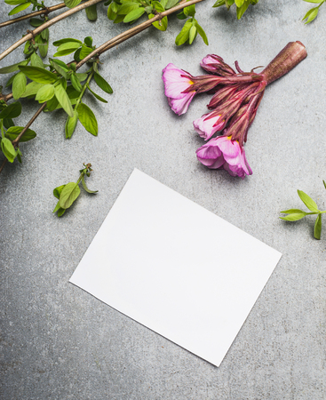fondo para tarjetas: Spring twigs and flowers with blank white paper card , top view Foto de archivo