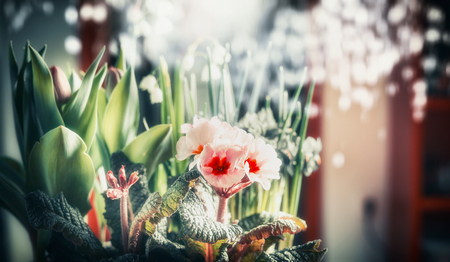 Pretty flowers at bokeh background, close up