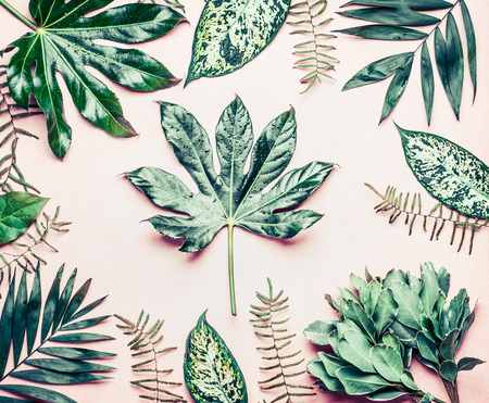 Creative layout made of various tropical palm and fern leaves. Exotic plants on pastel pink background, top view, flat lay