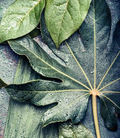 열대 야자수와 정글 잎으로 만든 크리 에이 티브 레이아웃, 상위 뷰를 닫습니다, 스톡 콘텐츠