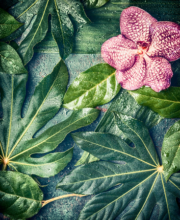 Orchid flowers on Creative tropical nature background with various palm and jungle leaves, top view. Exotic plants concept