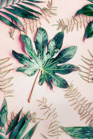 크리 에이 티브 플랫 다양 한 열 대 야자수와 파스텔 핑크 배경, 상위 뷰에 나뭇잎
