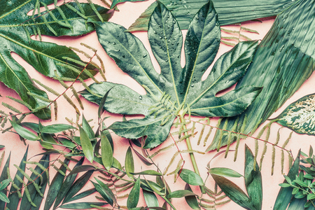 Various Tropical leaves with water drops, top view
