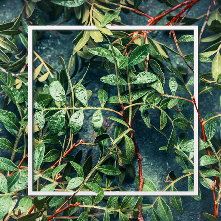lay: layout Frame of green leaves, top view . Vegetation nature background
