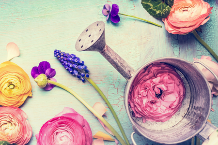 Watering can and garden flowers on vintage shabby chic background, top view, copy space, summer gardening concept Stock Photo