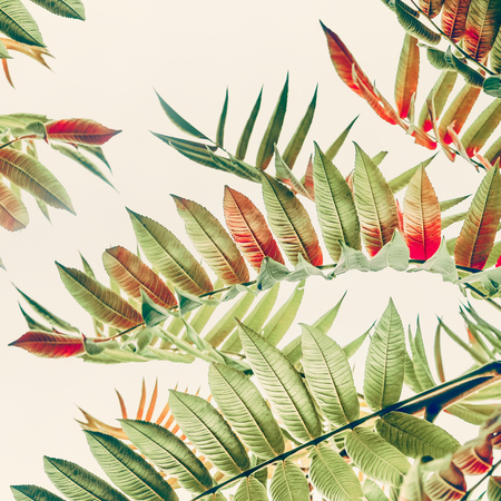 Green red Tropical jungle or leaves on light pastel background, close up, nature background