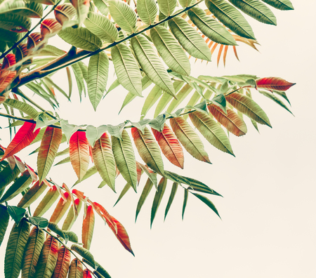Beautiful green red leaves. Tropical leaves on light background. Autumn fall nature