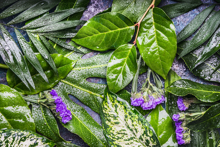 Tropical nature background with leaves with dew water drops and flowers, top view Stock Photo