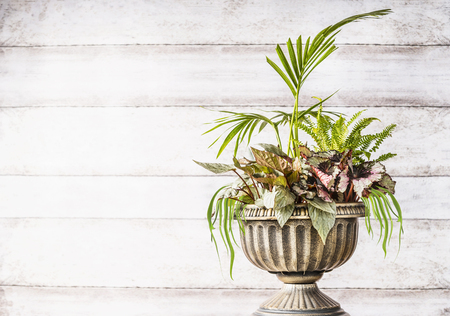 Beautiful patio urn planter arrangement with lovely plant of palm, grasses and leaf begonias at white wooden background,front view. Container gardening concept. Home  and office floral decor