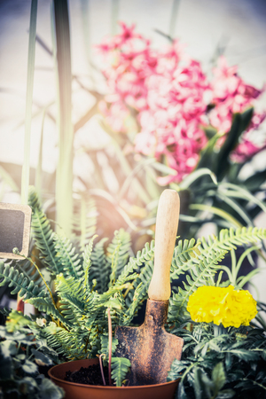 home grown: Summer flowers plant for garden with gardening tools, Fern and flowers seedling with shovel. Outdoor or indoor planting