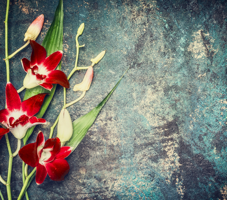 Red lily flowers on dark vintage background, top view, place for text or Stock Photo